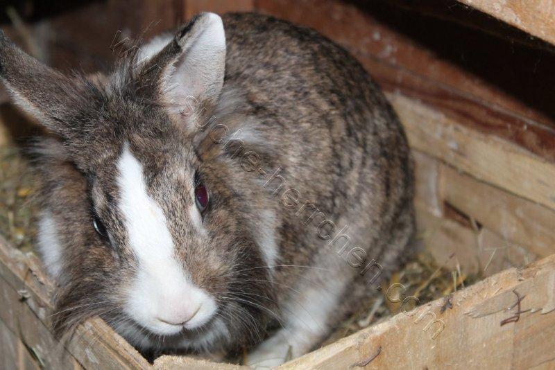Kaninchendame Mit Vollbart Suche Herrchen De