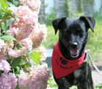 Terrierfreunde aufgepasst - Cookie sucht ihren Meister!