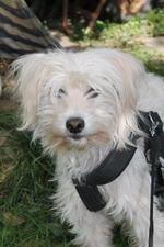 Vermittelt :: Vermittlungshilfe :: Frou-Frou - kein Hund für jedermann