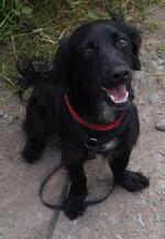 Murphy der zarte Hundebub