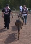 Animal Run 117.ORF