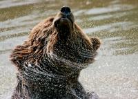 Bärenbad2