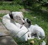Daisy mit pups (2)