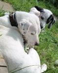 Daisy mit pups (5)