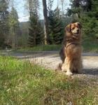 2 liebster Hund der Welt