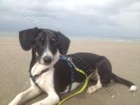 Teyha_Beach