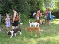 Sommerfest  Suche Herrchen 046