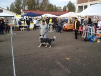 dog dancing Tierschutztag