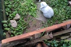 Emma-und-Kaninchen