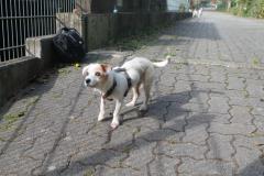 Sunny-Molly4