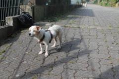 Sunny-Molly5