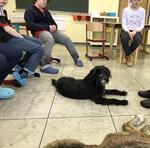 Erfolgsgeschichte :: Frida auf dem Weg zum Schulhund