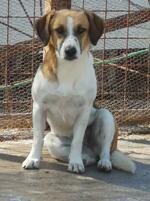 Kreta Traumhunde auf der Suche nach einem Zuhause Update 20.10.2020 : Neue Fellnasen
