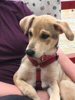 Vermittlungshilfe :: Mona Kleine Schmusemaus auf der Suche nach einem Zuhause