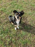 Vermittlungshilfe :: Ravina - Ein Traumhund in Kleinformat
