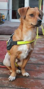 Vermittlungshilfe :: Sparky ein liebenswertes Hundekind