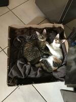 Erfolgsgeschichte :: Emma und Lotte