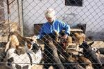 TASSO // Protestaktion für die Tierheimtiere in Sighisoara